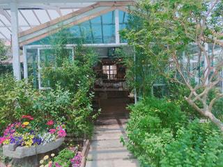 庭園の緑の植物の写真・画像素材[1184507]