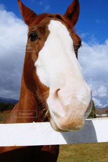 空,動物,牧場,馬,可愛い,牧歌の里,PassMe