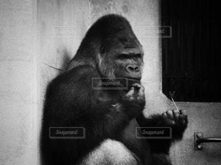 シャバーニの写真・画像素材[813143]