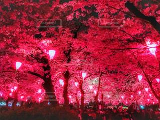 夜桜見物 - No.842330
