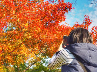 紅葉の写真を撮る人の写真・画像素材[844517]