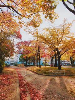 朝の紅葉の写真・画像素材[857419]