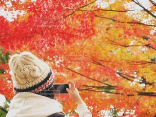 ステキな紅葉の写真・画像素材[864755]