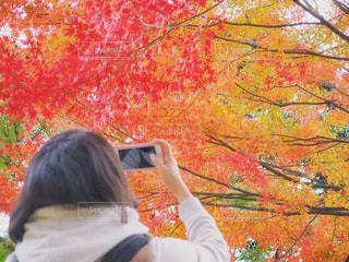 ステキな紅葉の写真・画像素材[864769]