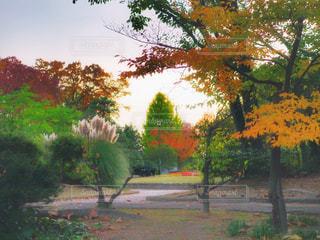 夕暮れ時の公園の写真・画像素材[873294]
