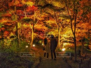 秋色の写真・画像素材[888486]