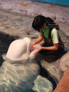 水族館の写真・画像素材[908991]