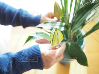 植物を持っている手の写真・画像素材[936268]