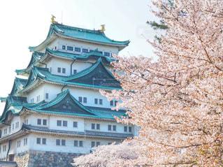 名古屋城と桜の写真・画像素材[1122292]