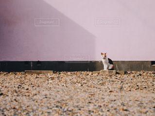 おさんぽで出会った猫の写真・画像素材[1217073]