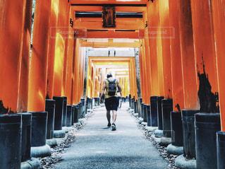 伏見稲荷の鳥居と男性の後ろ姿の写真・画像素材[1221311]