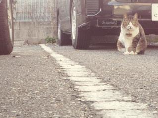 歩道の上に座っている猫の写真・画像素材[1232639]