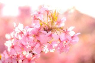 近くの花のアップの写真・画像素材[858504]