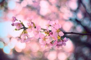 近くの花のアップ - No.858505