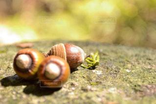 近くに緑のフィールドにカタツムリのアップの写真・画像素材[870287]