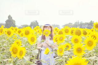 黄色の花の写真・画像素材[894330]