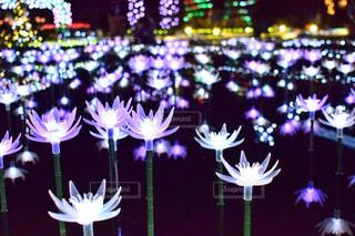 近くの花のアップ - No.921510
