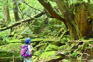 森の人々 のグループ - No.929150