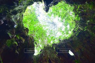 森の中の大きな滝の写真・画像素材[972959]
