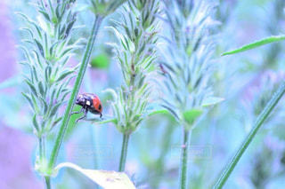 近くの花のアップの写真・画像素材[986698]