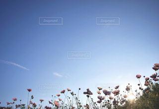 空に凧の飛行の人々 のグループの写真・画像素材[1106271]