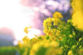 近くの花のアップの写真・画像素材[1125297]