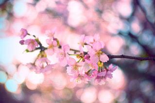 近くの花のアップの写真・画像素材[1125306]