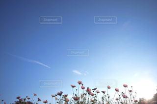空に凧の飛行の人々 のグループの写真・画像素材[1133245]