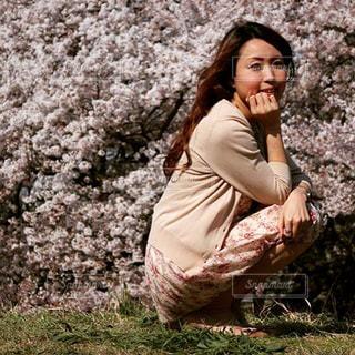 桜の写真・画像素材[629530]