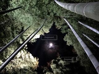 絶景,京都,観光,和風,竹林の小径
