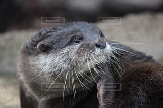 近くに動物のアップの写真・画像素材[705441]