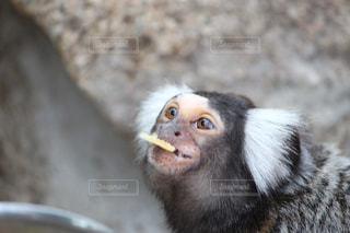 近くに猿のアップの写真・画像素材[706397]