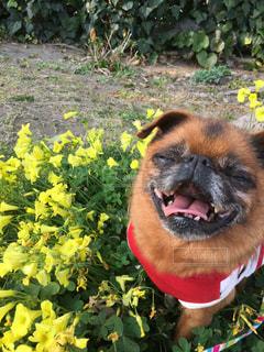 赤い花を付けている犬 - No.709925