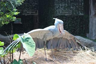 建物の前に立っている鳥 - No.710440