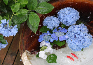 紫陽花と金魚 - No.770453