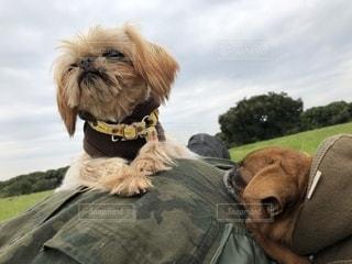 犬,動物,可愛い,休日,お出かけ,休日の過ごし方,ブリュッセルグリフォン,プチブラバンソン