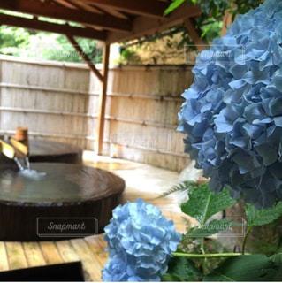 温泉,紫陽花,露天風呂,湯の花温泉,PassMe,すみや亀峰庵