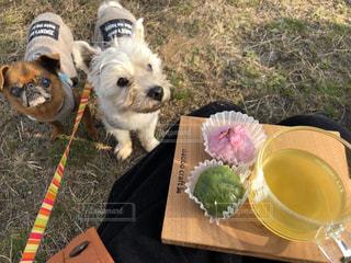 わんことお茶の写真・画像素材[1050693]
