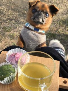 犬,桜餅,緑茶,草餅,お出かけ,煎茶,お茶タイム,犬とお出かけ,わんこと花見