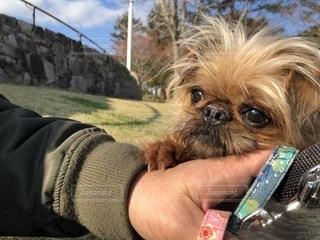 小型犬を持っている手の写真・画像素材[2080138]