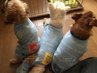 犬,動物,屋内,後ろ姿,背中,後姿,パジャマ,お揃い,ロンパス,お揃いコーデ