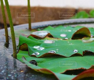 雨上がりの写真・画像素材[2165748]