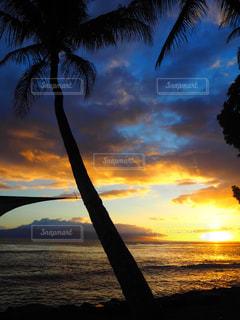ヤシの木の前に海に沈む夕日の写真・画像素材[958749]