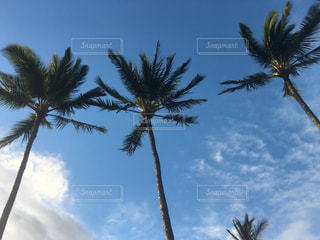 風景,空,秋,木,雲,青空,ヤシの木,夕空,パームツリー,秋空