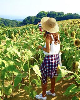 日焼け,麦わら帽子,夏休み,ひまわり畑,デート,淡路島
