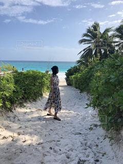 バハマ散歩の写真・画像素材[2431077]