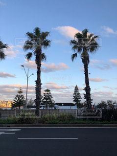 通りのヤシの木の写真・画像素材[2431102]