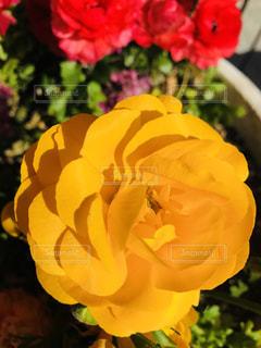 近くの花のアップの写真・画像素材[1078217]