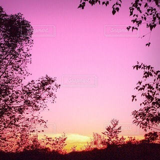 自然の写真・画像素材[55852]