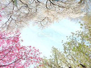 花,桜,ハート,新宿御苑
